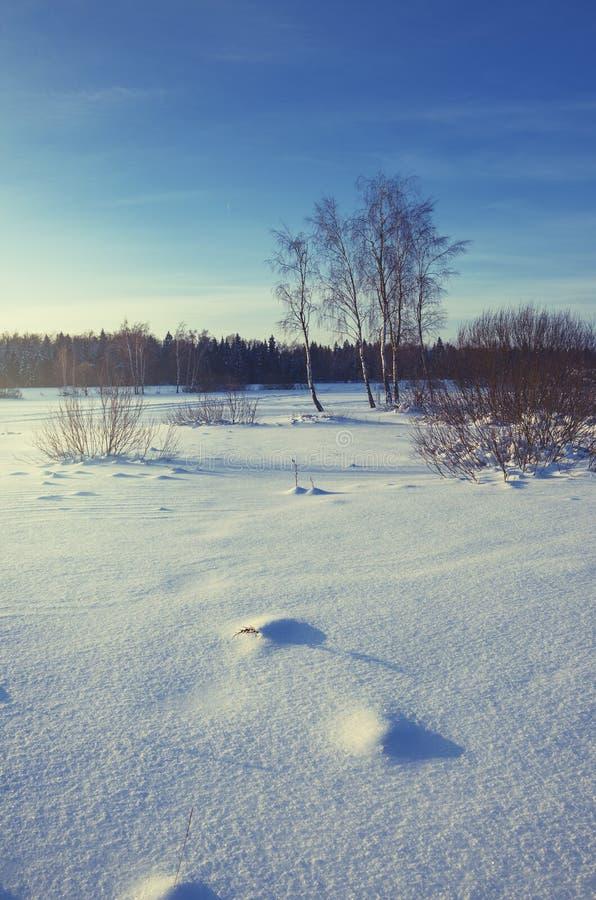 Paesaggio gelido di inverno con gli alberi di betulla fotografie stock libere da diritti