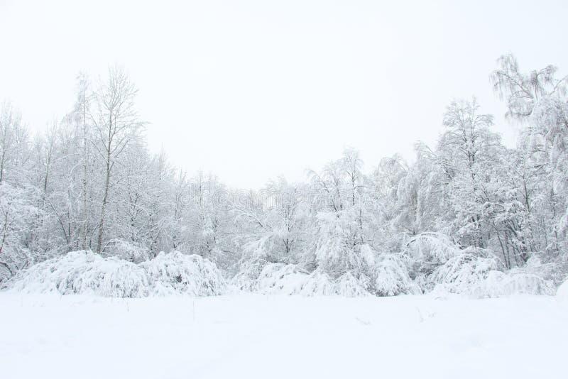 Paesaggio gelido di inverno magnifico per la spruzzata del fondo fotografia stock