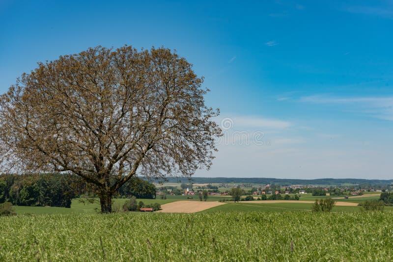 Paesaggio idilliaco con cielo blu in Baviera della Germania fotografia stock libera da diritti
