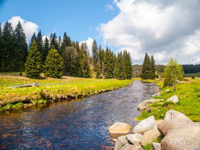 Paesaggio idilliaco con il fiume calmo della montagna il giorno soleggiato Pietre bianche e prati ed alberi verdi Parco nazionale fotografia stock
