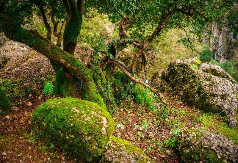 Paesaggio idilliaco della foresta con la pietra muscosa, il tronco di albero muscoso e la sua radice Manavgat, Adalia, Turchia fotografie stock libere da diritti