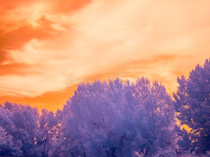 Paesaggio infrarosso fotografia stock