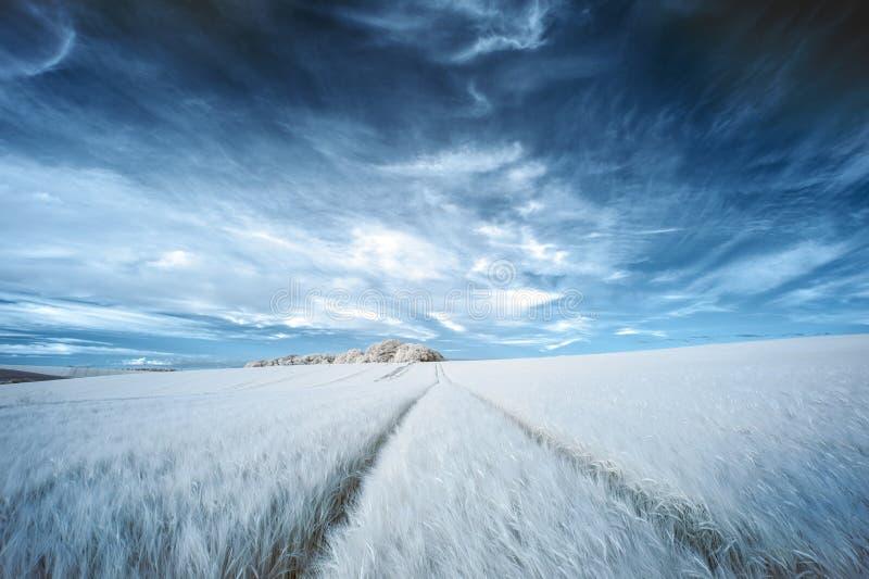 Paesaggio infrarosso di estate di colore falso surreale sbalorditivo sopra il agri immagine stock libera da diritti