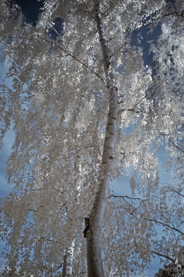 Download Paesaggio Infrarosso Unico Beautioful Sbalorditivo Con Colore Falso Immagine Stock - Immagine di unico, cielo: 55364157