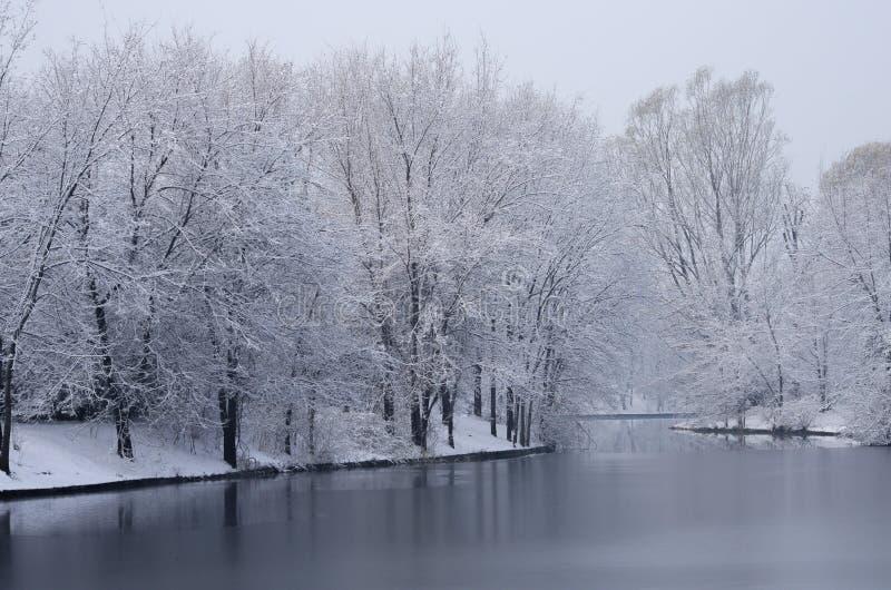 Paesaggio invernale con alberi biondi sotto la neve fotografie stock