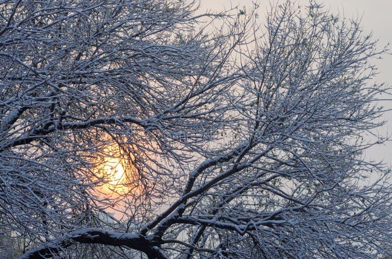 Paesaggio invernale con alberi biondi sotto la neve fotografia stock libera da diritti