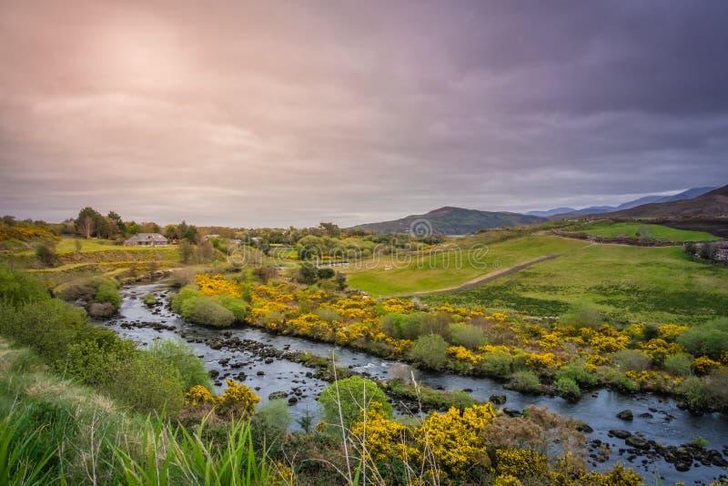 Paesaggio irlandese verde immagine stock libera da diritti