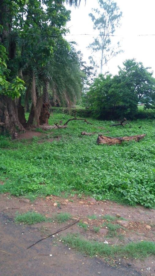 Paesaggio junglebeuty di Jungletour Greenville lookingbeauty immagini stock