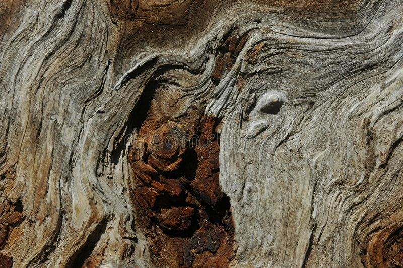 Paesaggio in legno fotografia stock