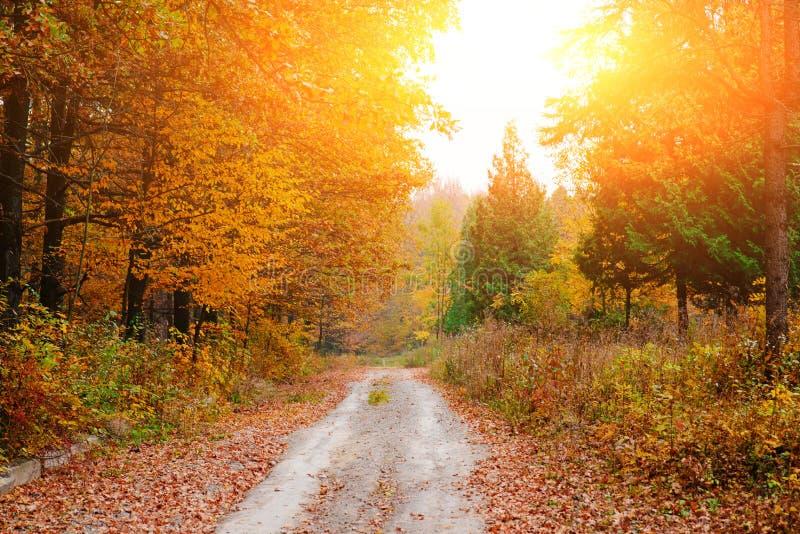 Paesaggio luminoso e variopinto della foresta soleggiata di autunno con fogliame e la traccia arancio fotografia stock