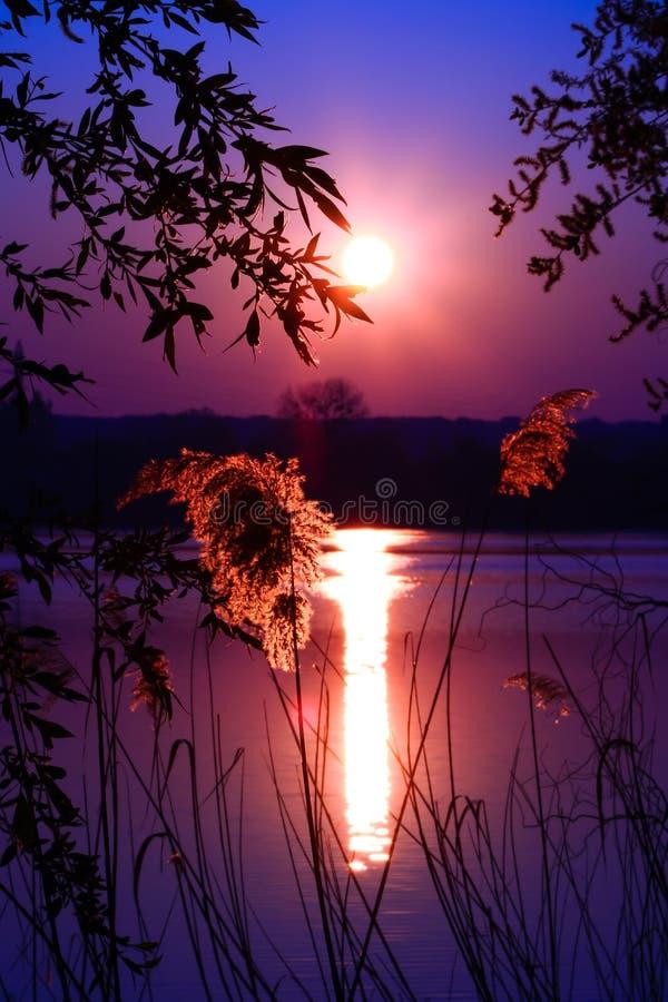 Paesaggio maestoso con un sole in alto vicino e vegetazione fotografia stock