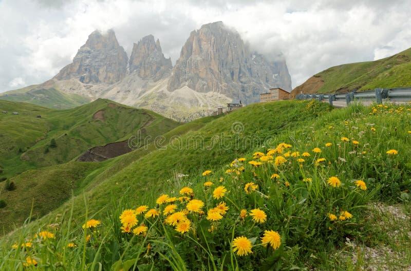 Paesaggio maestoso di estate del passaggio Sella con i fiori selvaggi sui prati erbosi verdi fotografia stock