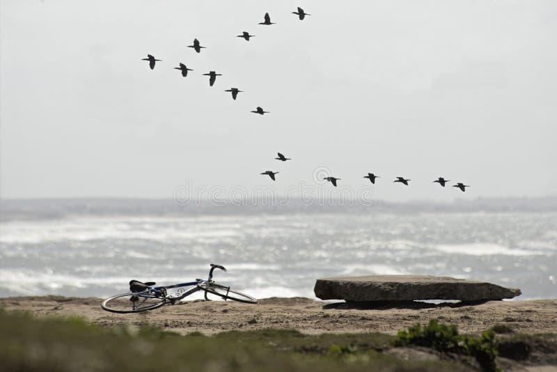 Paesaggio marino in Argentina fotografia stock