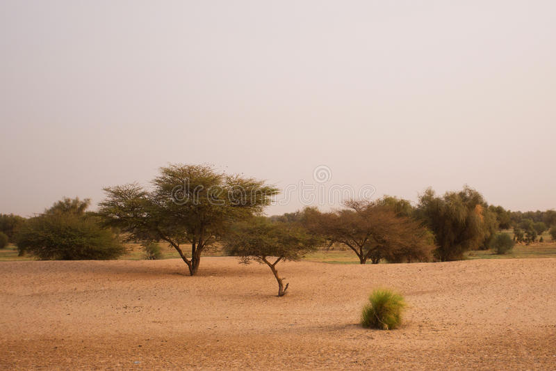 Paesaggio mauritaniano fotografie stock