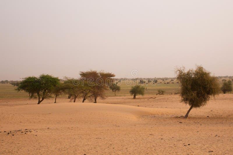 Paesaggio mauritaniano fotografia stock libera da diritti