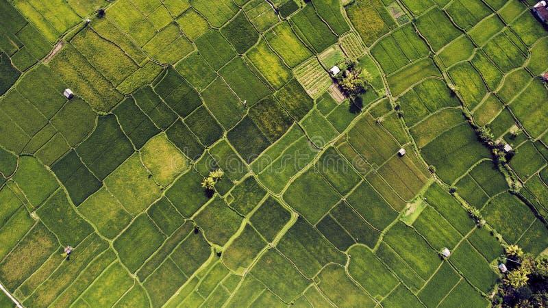 Paesaggio meraviglioso delle risaie con le piante con alimento biologico sano in campagna fotografia stock