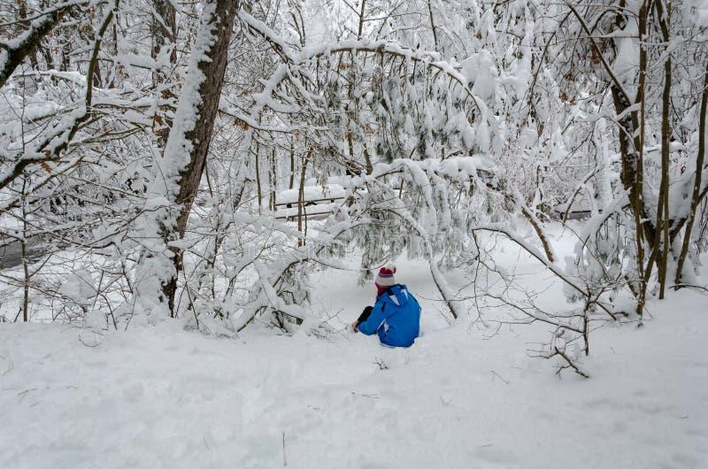 Paesaggio meraviglioso di inverno Gli alberi sono coperti di neve fotografia stock libera da diritti