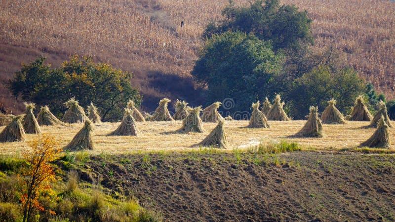 Paesaggio messicano rurale del campo fotografia stock libera da diritti