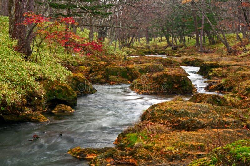 Paesaggio mistico fotografie stock libere da diritti
