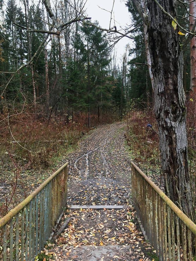 Paesaggio misto della foresta della foresta di autunno immagini stock libere da diritti