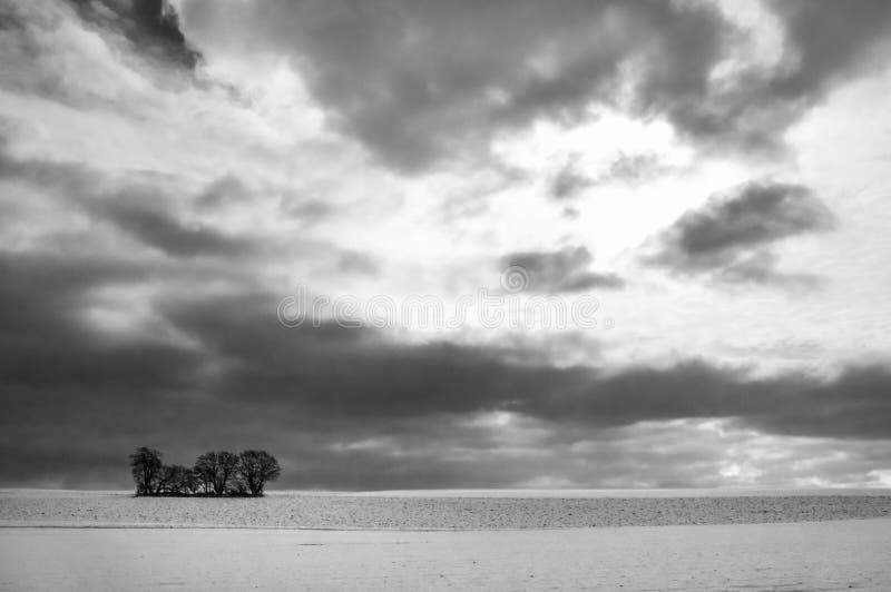 Paesaggio monocromatico di inverno con gli alberi e la neve fotografia stock