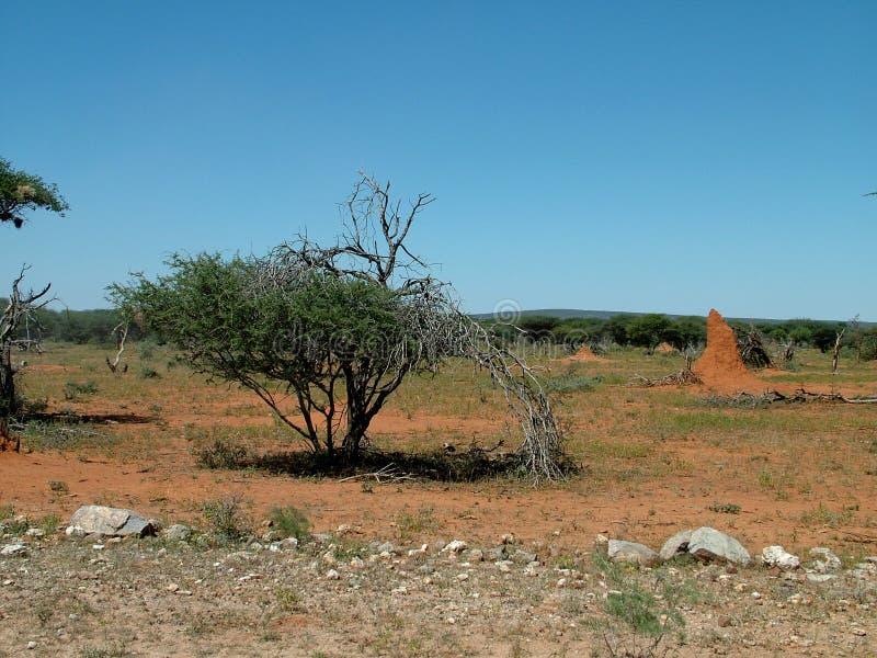 Paesaggio namibia fotografia stock