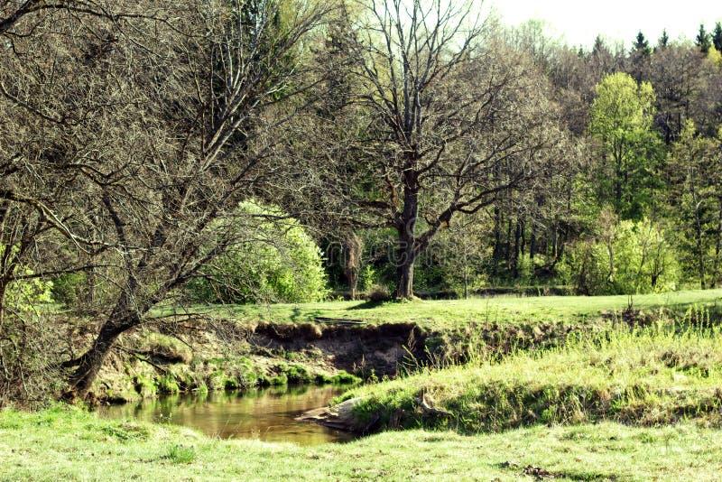 Paesaggio, natura, foresta della quercia, parco, fiume immagini stock libere da diritti