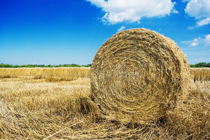 Paesaggio naturale Campo con la balla di fieno sotto il cielo blu immagini stock libere da diritti