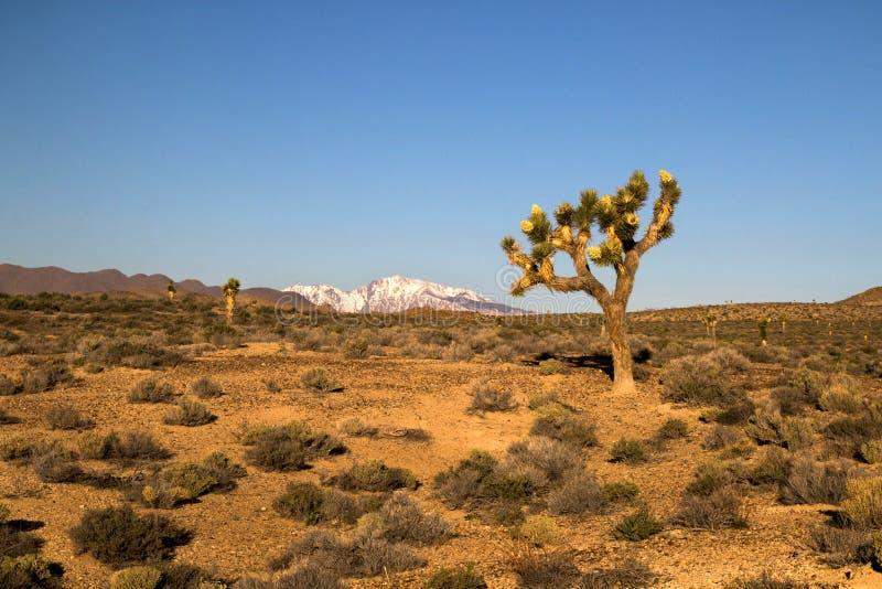 Paesaggio naturale del deserto di siccità con il cespuglio, gli arbusti e gli alberi del cactus, montagna con neve sulla parte po fotografia stock