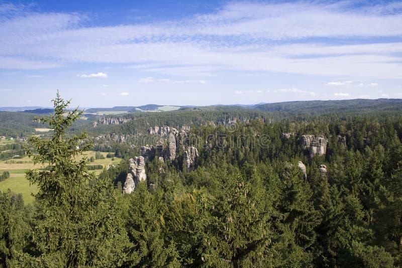 Paesaggio naturale di giorno di estate dei pini fotografia stock