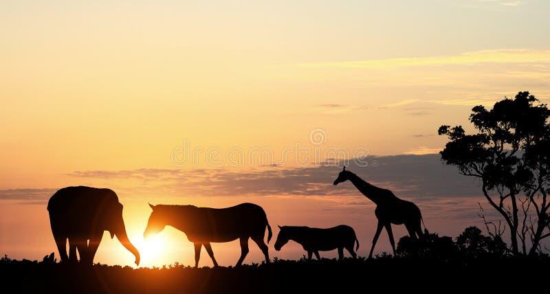Paesaggio naturale di safari alle luci del tramonto Media misti fotografia stock libera da diritti