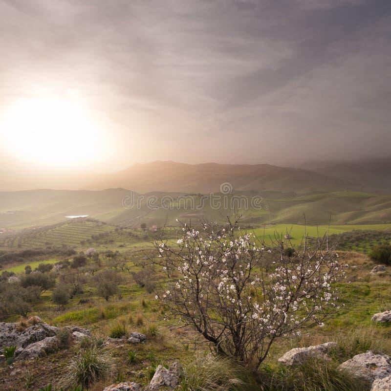Paesaggio nebbioso della retroterra siciliana immagine stock