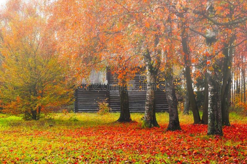 Paesaggio nebbioso di autunno - casa di legno fra gli alberi ingialliti immagini stock libere da diritti