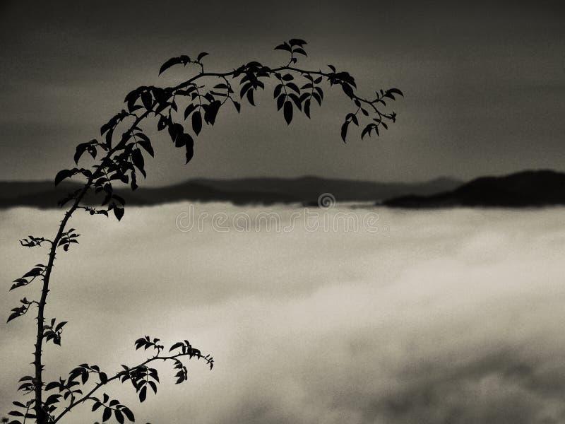 Paesaggio nebbioso di autunno, ramo della rosa canina, mattina dopo la notte piovosa. immagine stock