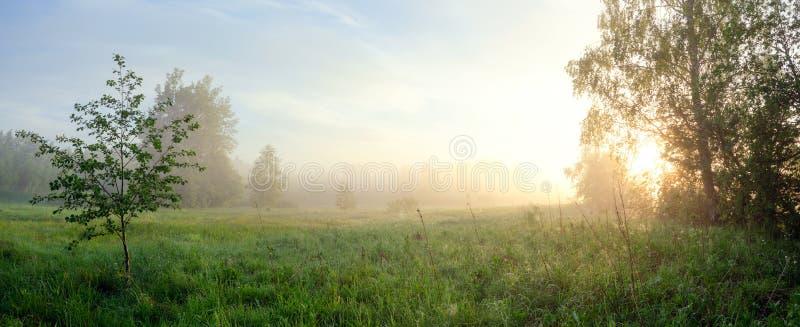 Paesaggio nebbioso di estate con il grande prato inglese della foresta e sole che splende attraverso i rami di albero fotografia stock libera da diritti