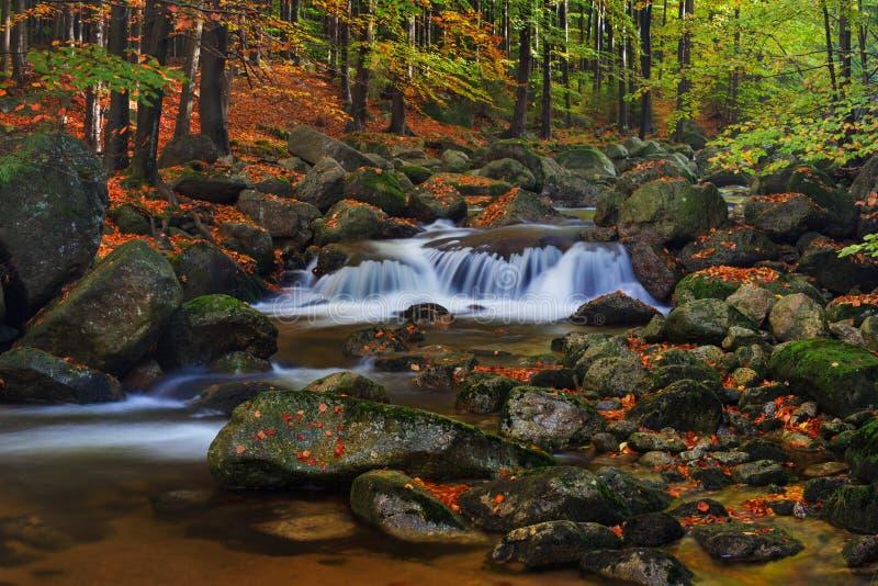 Paesaggio nebbioso di estate o di autunno Mattina nebbiosa nebbiosa con il fiume in una valle del parco della Boemia della Svizze fotografia stock