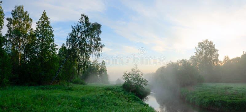 Paesaggio nebbioso di estate serena con gli alberi che crescono sulla banca del fiume all'alba fotografia stock libera da diritti