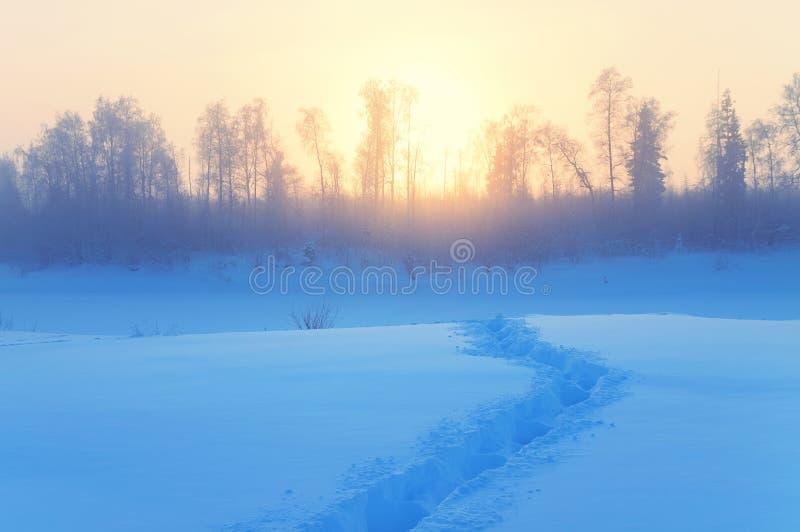 Paesaggio nebbioso di mattina di inverno fotografia stock