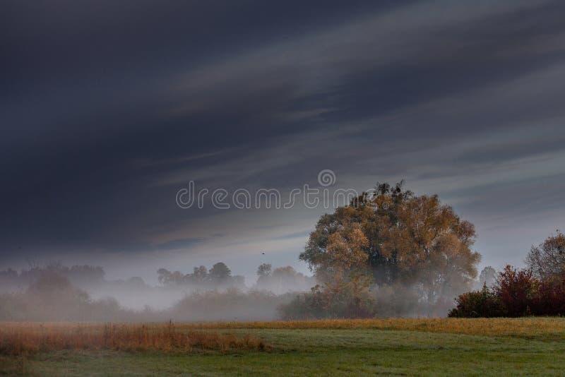 Paesaggio nebbioso di mattina nel River Valley immagine stock libera da diritti