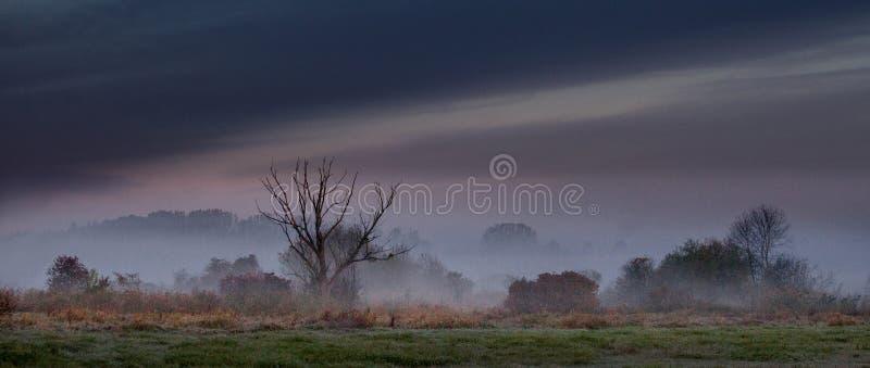 Paesaggio nebbioso di mattina nel River Valley fotografia stock