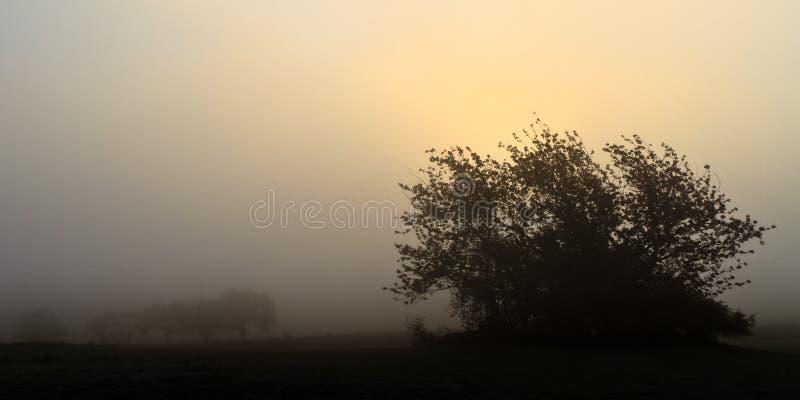 Paesaggio nebbioso di novembre fotografia stock libera da diritti