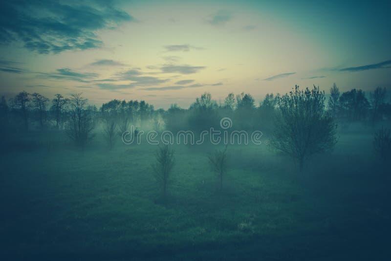 Paesaggio nebbioso di sera immagini stock