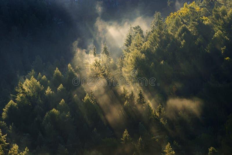 paesaggio nebbioso Mattina nebbiosa in una valle del parco della Boemia della Svizzera Paesaggio della repubblica Ceca fotografia stock libera da diritti
