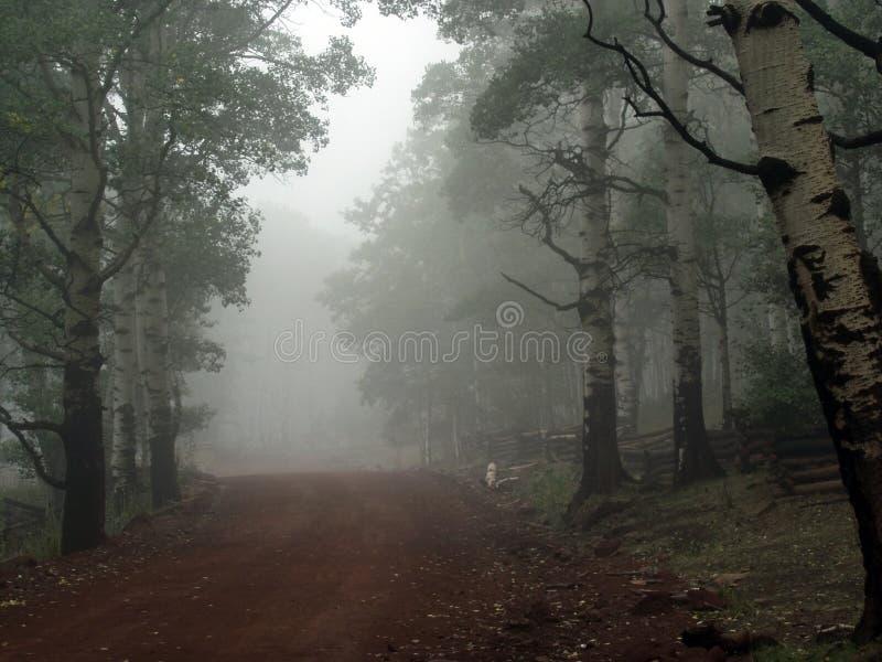 Paesaggio nebbioso nelle montagne dell'Utah immagini stock libere da diritti