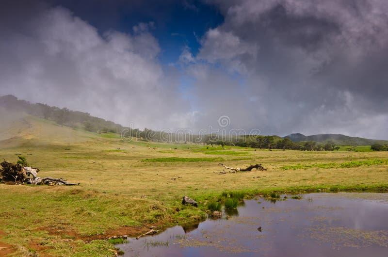 Paesaggio nebbioso in un athmosphere mistico fotografia stock