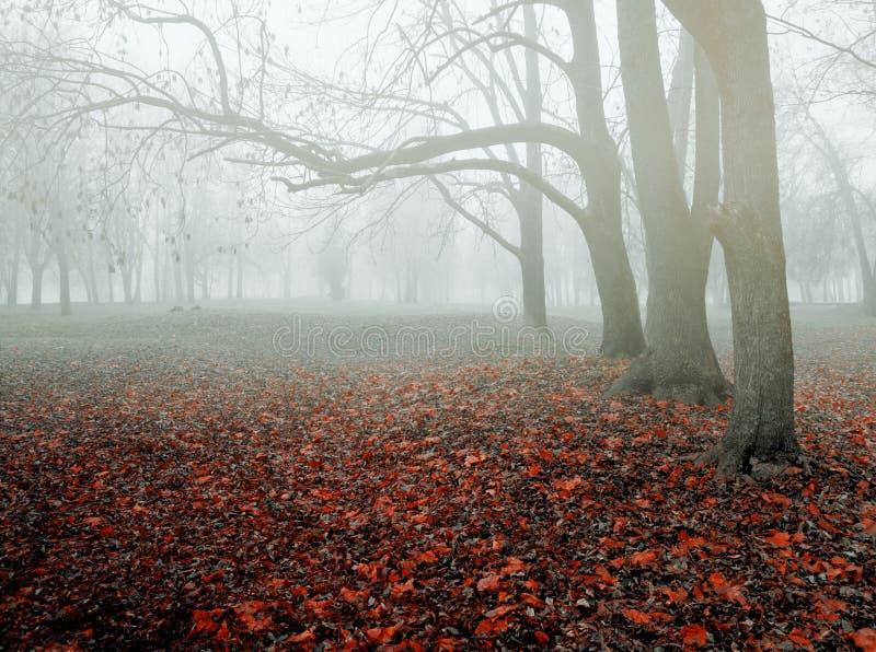 Paesaggio nebbioso variopinto di novembre di autunno Alberi nudi e foglie di autunno rosse cadute asciutte, natura misteriosa di  fotografie stock libere da diritti