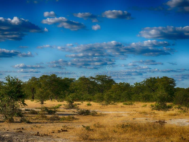 Paesaggio nel parco nazionale di Moremi, Botswana fotografie stock libere da diritti