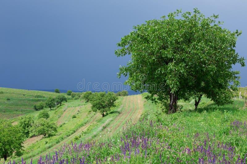 Paesaggio nella Transilvania, Romania immagine stock