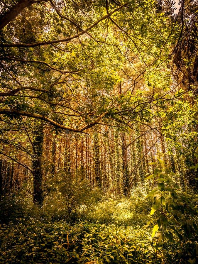 Paesaggio nelle arti, un coruna, Spagna della foresta Alberi e banchi con la luce e le ombre del sole fotografie stock libere da diritti