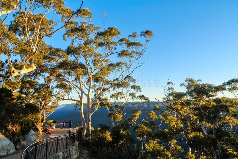 Paesaggio nelle montagne blu, Australia, con gli alberi di eucalyptus fotografia stock